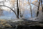 Winter beauty -