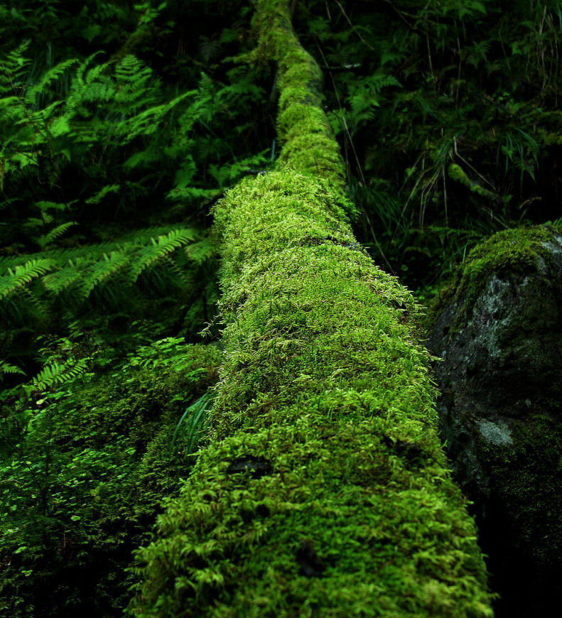green path into the - photo #29