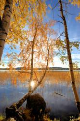 Yellow autumn.