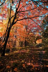 Autumn glory..