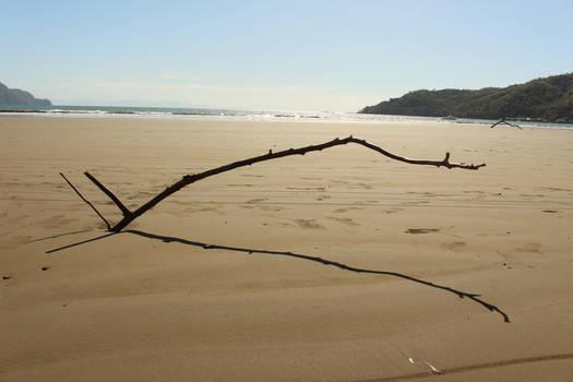 A stick in the beach