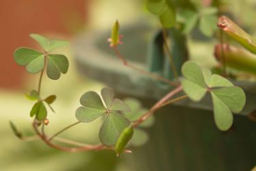 Little clovers