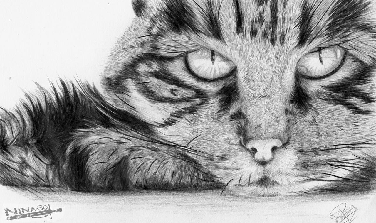 Gato a lapiz by nina 30 on deviantart - Blanco y negro paint ...