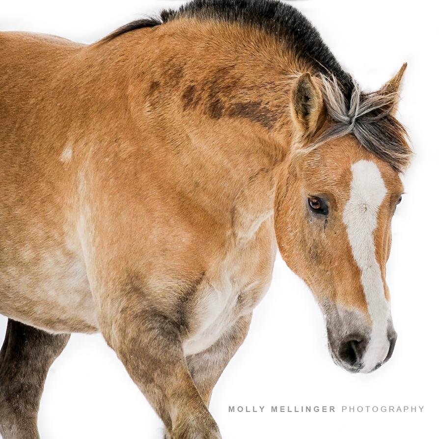Winter Horse by JAGfotos