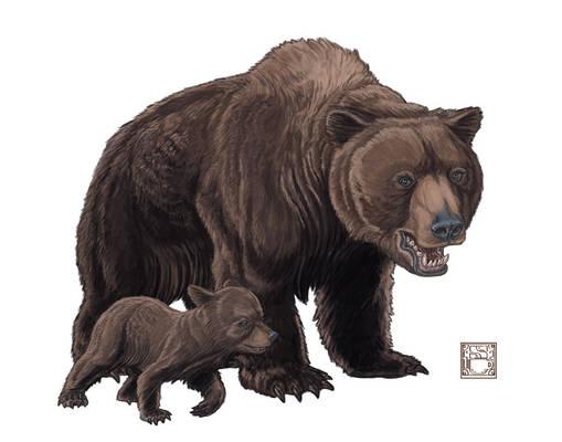 Ursus spelaeus (Cave Bear)