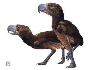 Phorosrhacos longissimus - Terror Bird