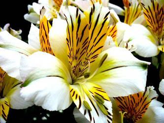 Flower by liebackandrelax
