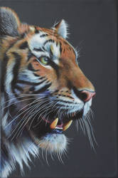Tiger! by karlhcox