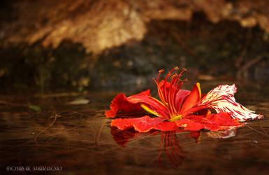 flower by mojab