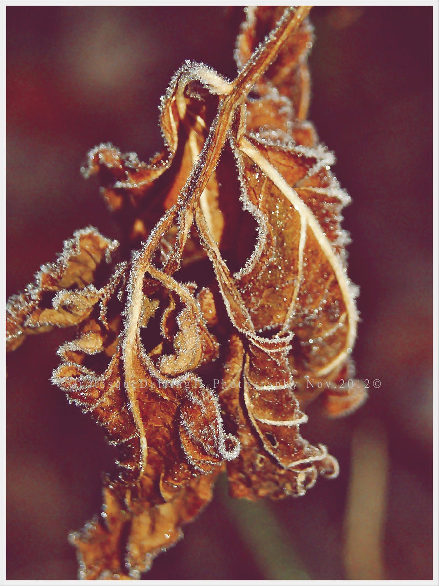 .Gone. Long B e f o r e The Cold by GrotesqueDarling13