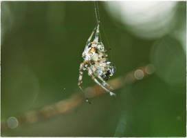 Glittered In Drops