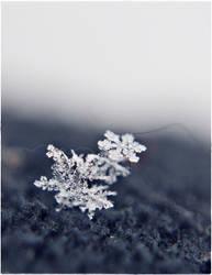In Winters Light