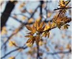 When Sun Light Grows On Trees