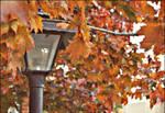 A T o u c h of Autumn Here