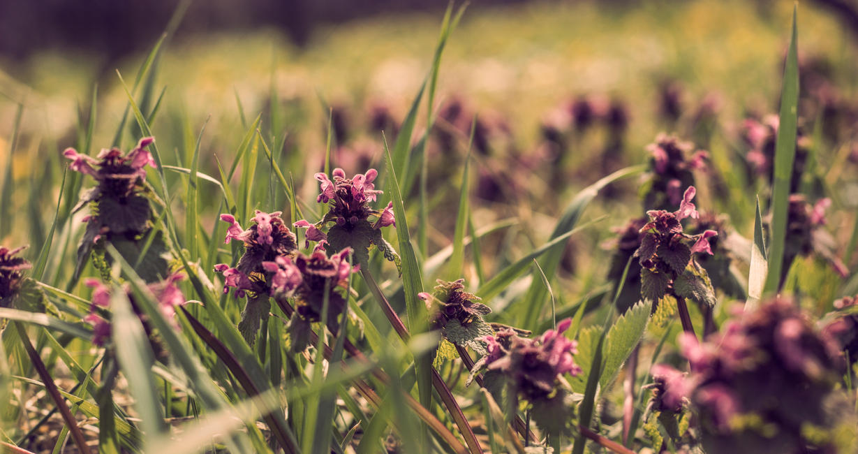 Silent Spring by francy93