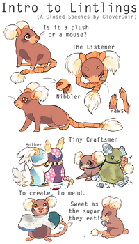 Introduction To Lintlings (A Closed Species)