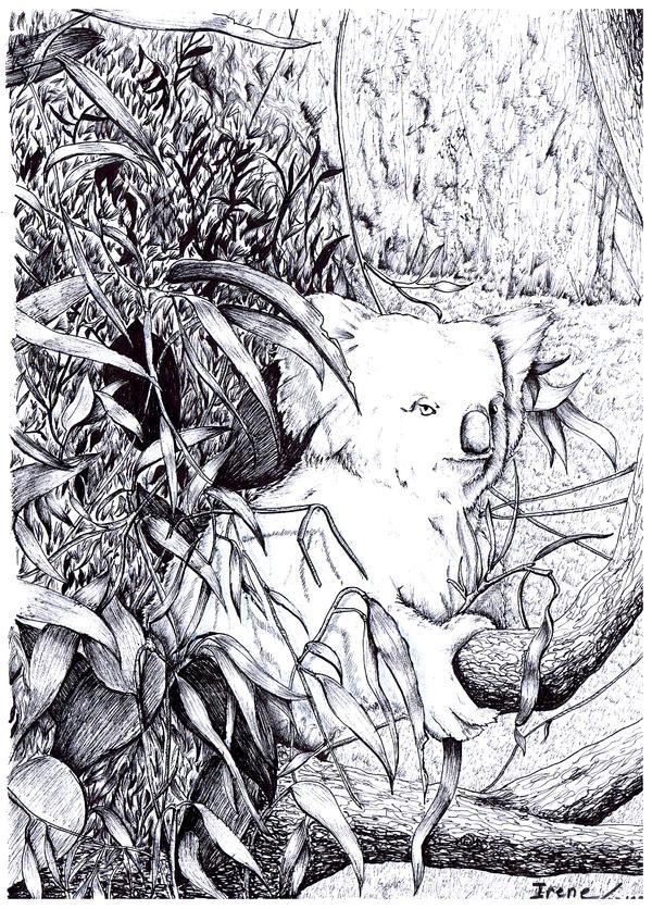 Koala by Andreth
