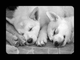 Puppies by JOhanka1412
