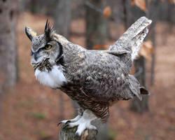 Great Horned Owl by oriniity