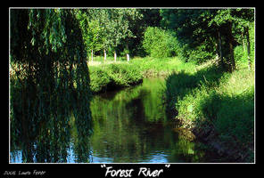 Picture - Forest River by PinkFireFly