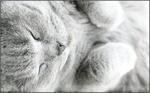 Blissful Sleep by PinkFireFly