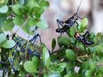 Exotic Crickets by farfullo