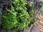 Odd Moss
