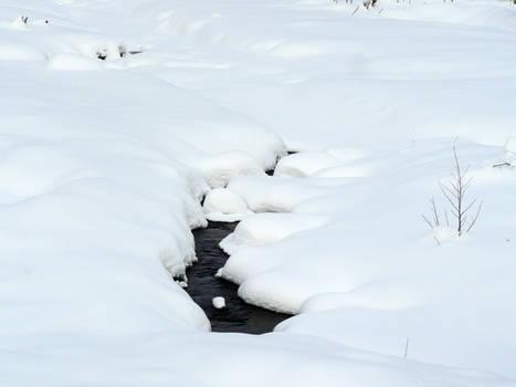 breaking through the snow