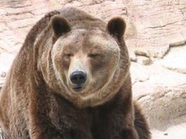 Bear by mrlayance