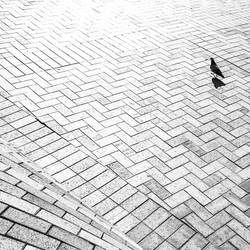 Out of the Pigeonhole by dynax700si