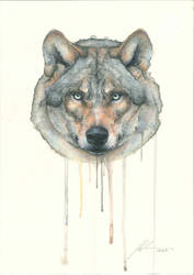 Watercolor Wolf by RandomMumble