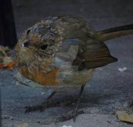 Juvenile European Robin(taken with Sony Cybershot)