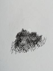 A sketch of my guinea pig