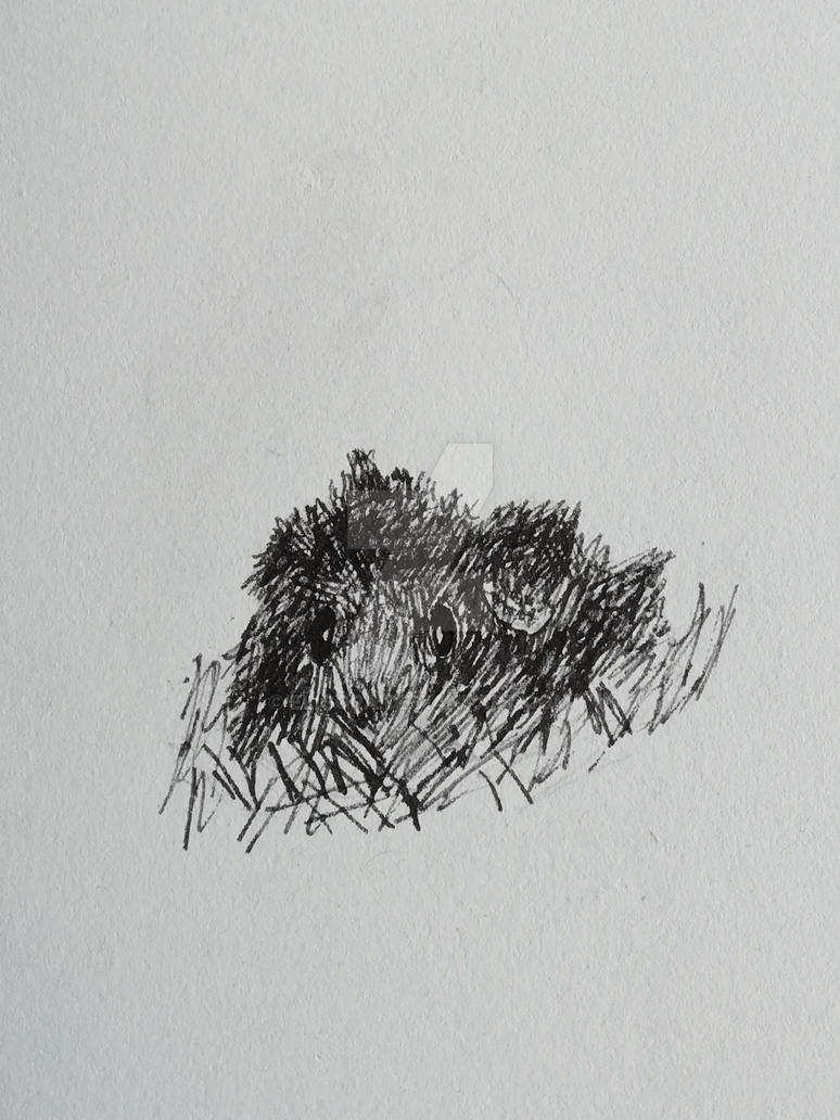 A sketch of my guinea pig by Eligora