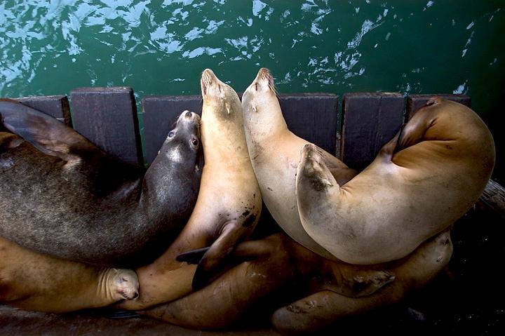 seals by Trueblood