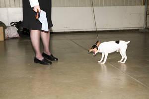 dog show 1 by Trueblood