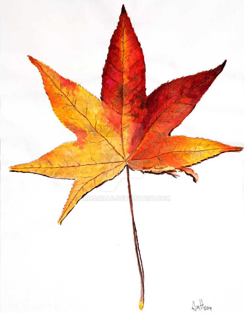 Maple Leaf by armahillo