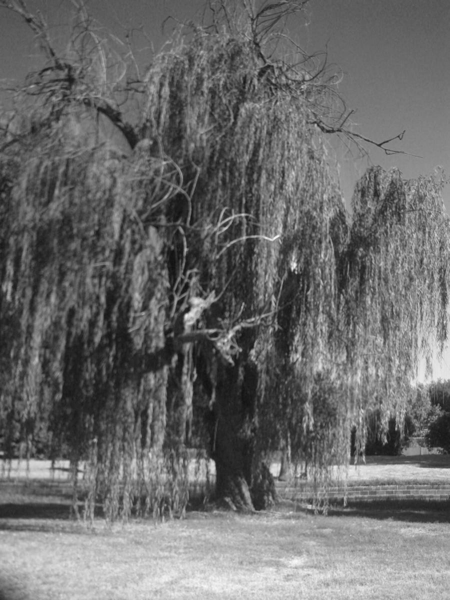 willow creek leitungskongress 2018