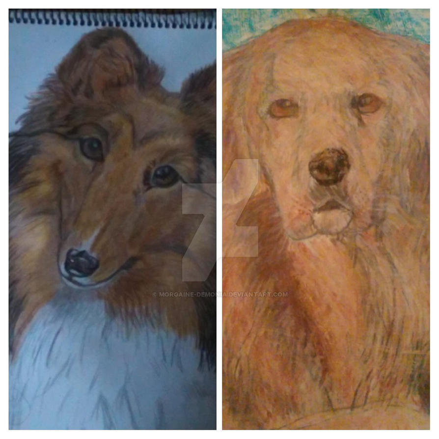 Dog drawings by Morgaine-Demonia