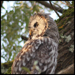 Owl by ToxTheErisian
