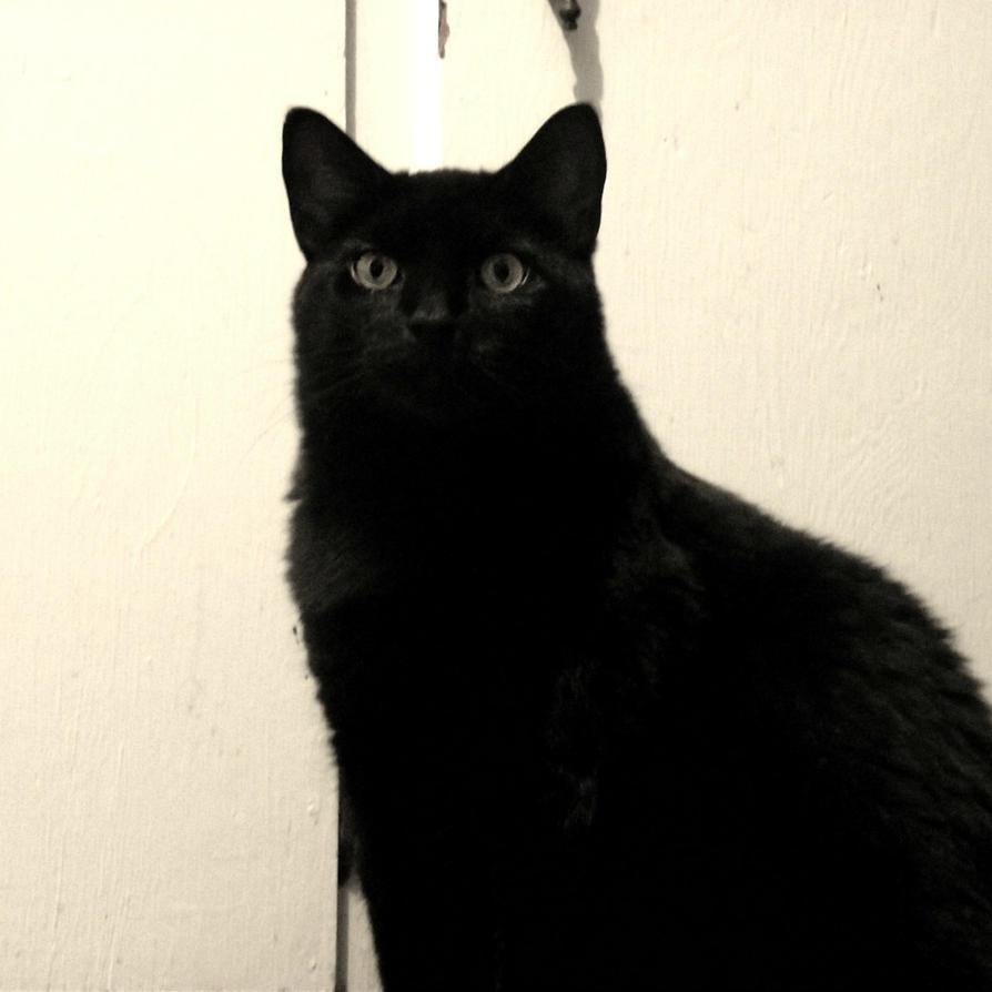 Big Fat Black Cat 96