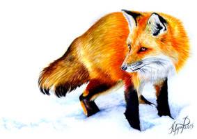 Fiery Fox by Kariatyda