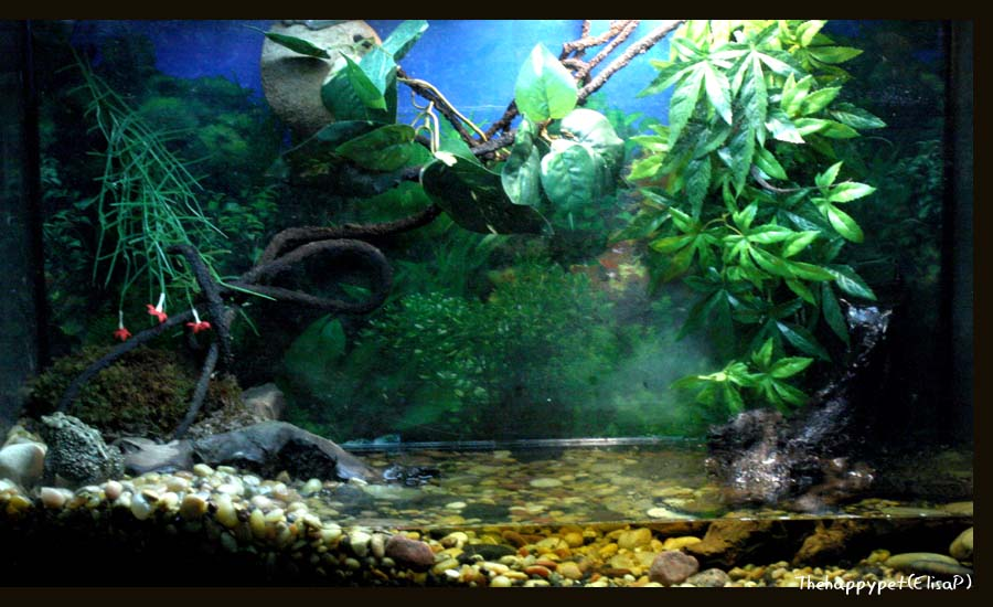 Frog tank 29 by thehappypet on deviantart for Fish tank frogs