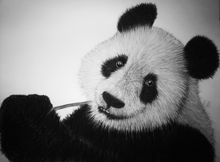 Panda Pencil Drawing Panda Charcoal Drawing byPanda Drawing In Pencil