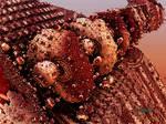 Mandelbulb Worm