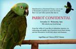 Promotion for Homeless Birds Everywhere