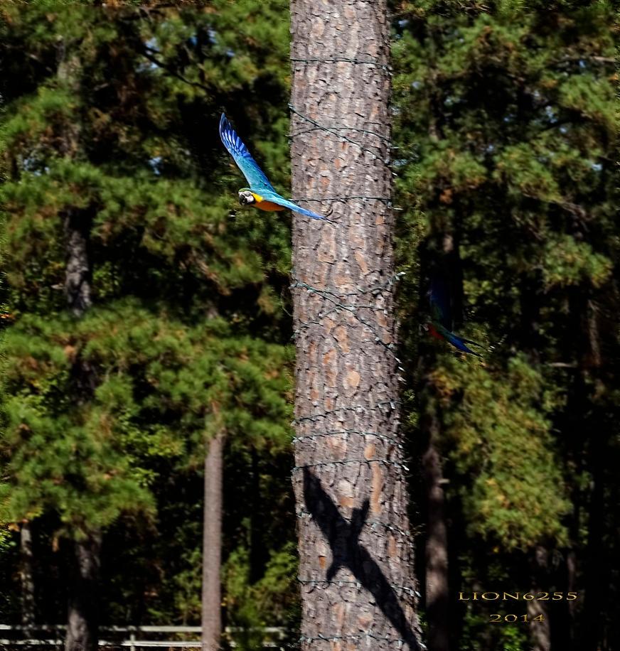Free Flight by Lion6255