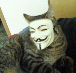 kittehclawz's Profile Picture