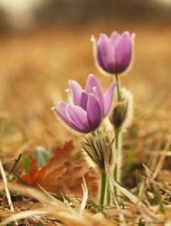Spring awakening by orchidka