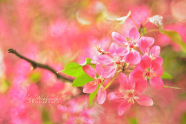 Spring by orchidka
